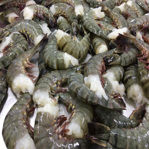 Raw-HLSO-Black-Tiger-Shrimp1